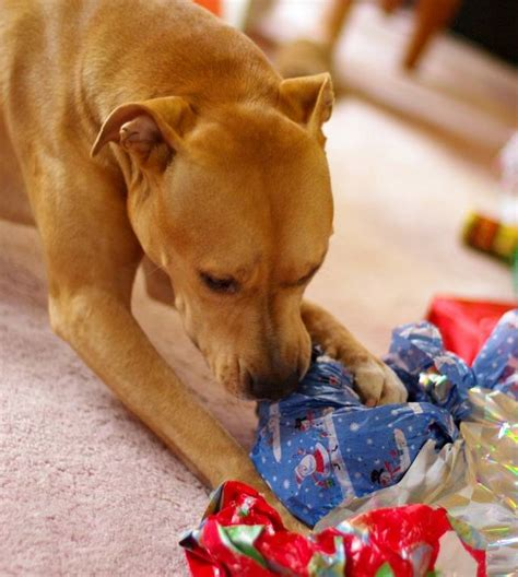 gift ideas for a pered pet this holiday season