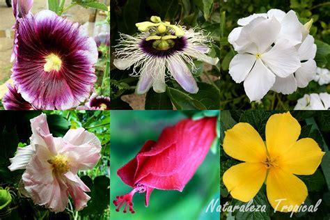 imagenes de flores ornamentales naturaleza tropical plantas ornamentales con propiedades