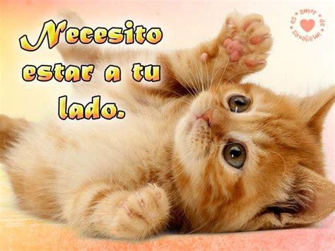 imagenes tiernas gatitos las 25 mejores ideas sobre imagenes tiernas para descargar