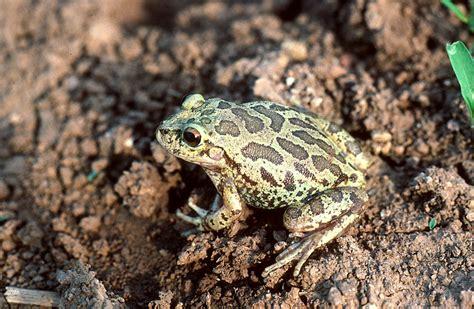 tropical desert animals and plants alamos nomenclature