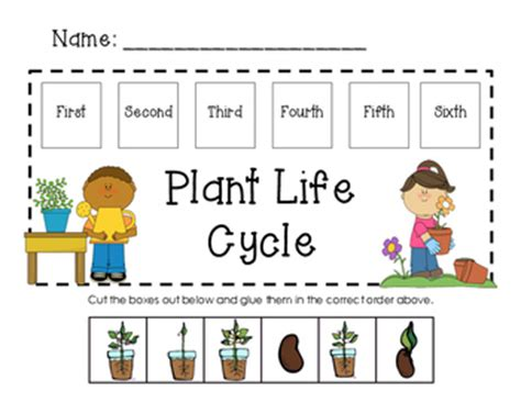 Jersey Marine Manmals 2000 Ms cycle of a plant for kindergarteners worksheets