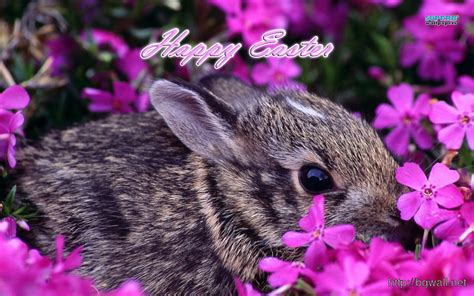 free wallpaper easter bunny easter bunny wallpaper background wallpaper hd