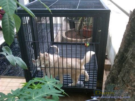 Kandang Kucing Cikarang dunia anjing produk anjing kandang anjing murah custom
