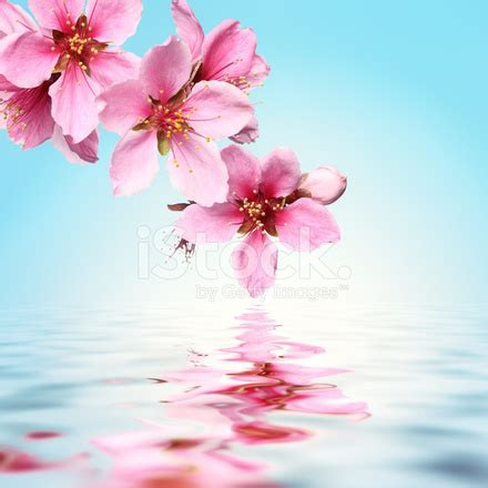 flower images flower water background stock photos freeimages