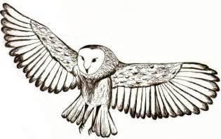 Owl Outlines Drawings by Owl In Flight By Mandah Pandah On Deviantart