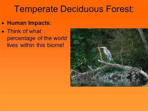 Which Biome Is Logging Hardwood Trees - major ecosystems of the world ppt