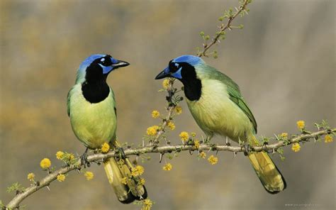 Two Birds 10 beautiful birds size hd wallpapers wonderwordz