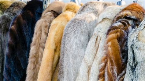 real or how do you wear your fur would you wear real fur learnenglishteens