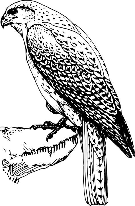 OnlineLabels Clip Art - Falcon 2