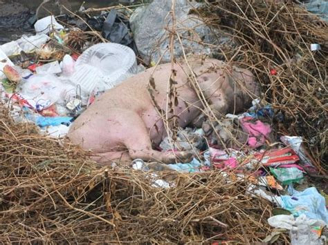 imagenes animales muertos 12 best images about cuidar nuestro medio ambiente on