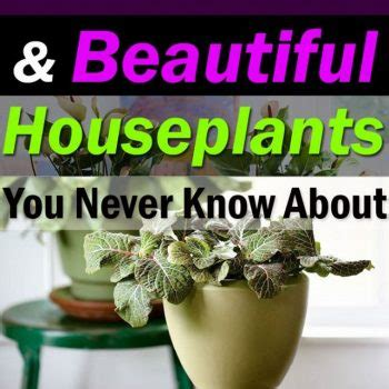 29 most beautiful houseplants you never knew about 23 easy to make ideas building a small backyard seating