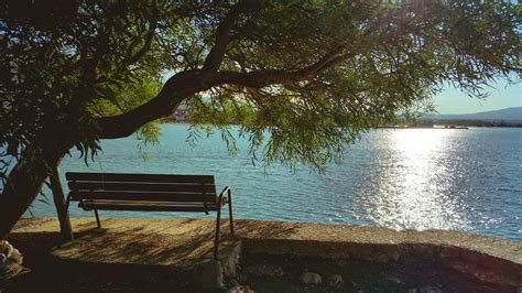 bench under tree bench under tree during day beside body of water 183 free