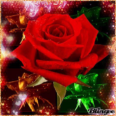 Imágenes Rosas Para Ti | rosas para ti fotograf 237 a 125999834 blingee com