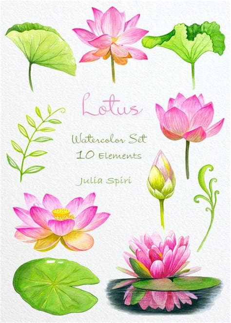 watercolor lotus tutorial 119 best watercolor images on pinterest pomegranate