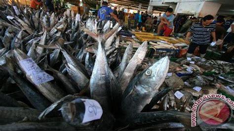 ciri ciri bahan makanan laut  segar health liputancom