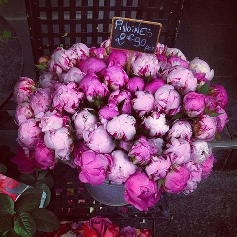 peonies in season peony season my style pinterest