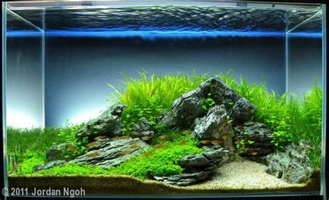 Iwagumi Aquascape by Aquascape Nano Cube Beautiful Editor And