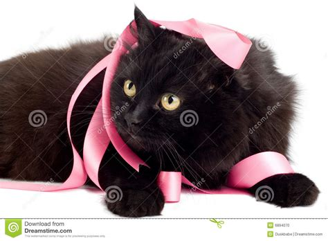 Cat Black Pink black cat with pink ribbon stock photo image of