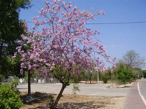 tree l invasive plants list for south africa