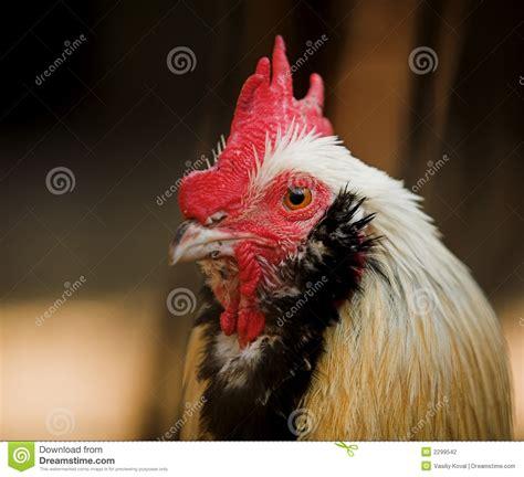 pelea de gallos del rayo mon diez 2015 pelea de gallo newhairstylesformen2014 com