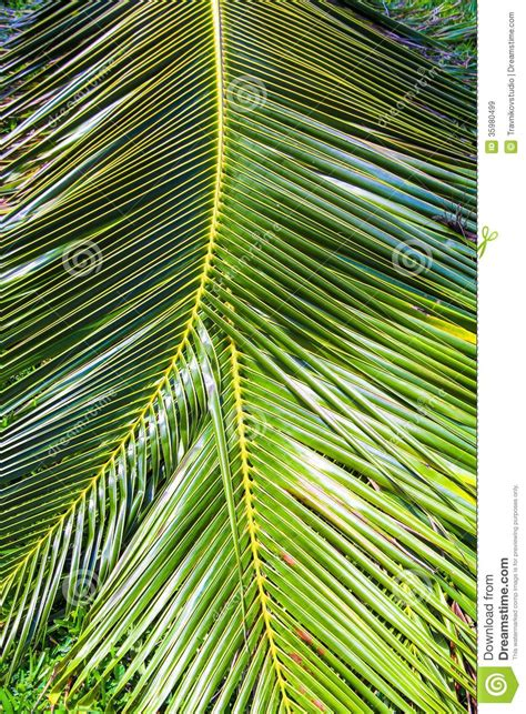 close  large palm leaves stock image image  growth