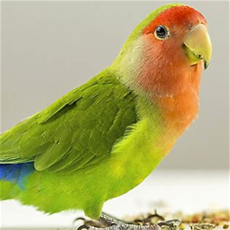 bird supply list: products & accessories   petsmart