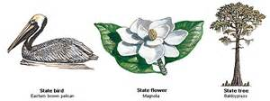 Louisiana State Bird And Flower - oes tours the usa louisiana