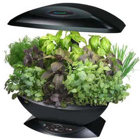 hydroponic indoor herb garden aerogarden automated indoor kitchen garden the green head