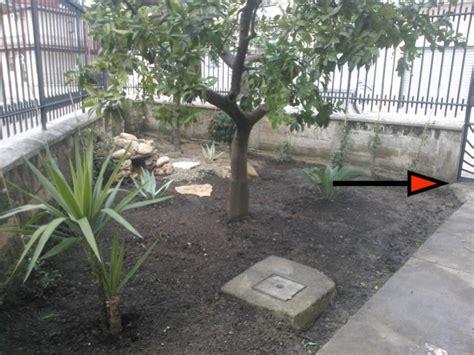 recinto per tartarughe in giardino preparazione giardino pagina 2