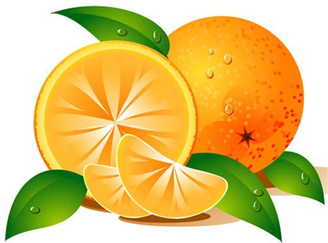 free orange clipart fruit clip art cliparting com
