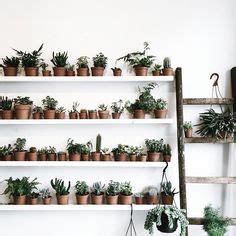 indoor plant ideas images indoor plants house