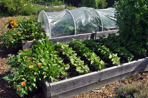 square foot gardening without raised beds p patch vegetable gardening our family s experience