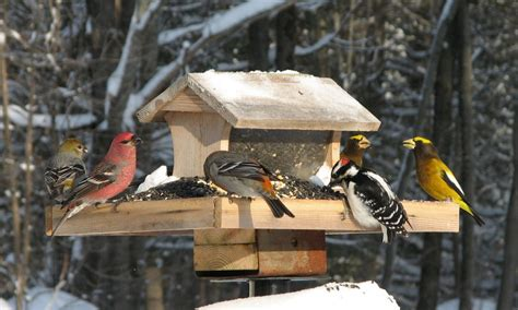 climate change alters cast of winter birds