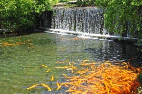 Home Decor Walmart by 7 Most Breathtaking Koi Fish Ponds Qnud