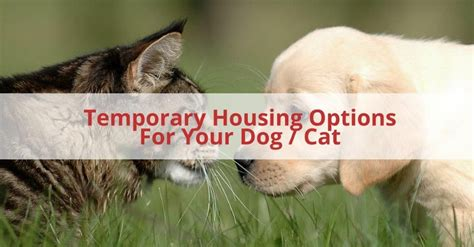 temporary dog housing 6 options for temporary housing for your dog cat