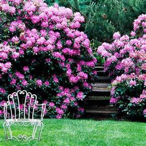 best winter garden plants 60 best images about rhododendrons on