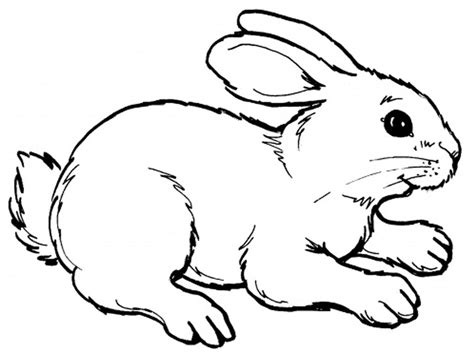 Coloring Pages Rabbits Coloring Pages Realistic Realistic Coloring Pages To Print
