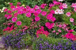 Pink Flower Garden Flower Garden In Pink And Purple By Sally Weigand