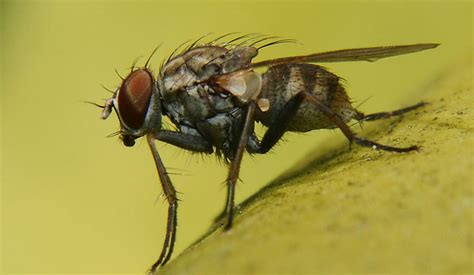 what causes gnats in a house how to get rid of gnats in the house health tips fast home remedies