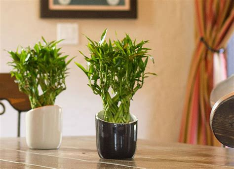 Where To Put Plants In House | best indoor plants 7 picks for every room bob vila