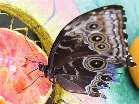 casa farfalle montegrotto farfalle e fiori casa delle farfalle di montegrotto terme