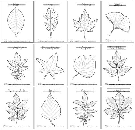 coloring pages of different types of flowers trees coloring pages coloring page of a pecan tree