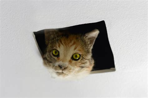Cat Ceiling by And Franco Mattes Gt 0100101110101101 Org