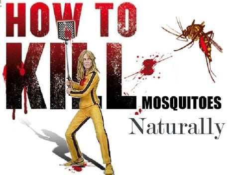how to kill mosquitoes in home the best 28 images of how to kill mosquitoes in home how