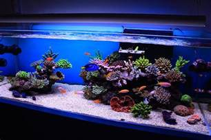 reef aquascaping on reef aquarium saltwater