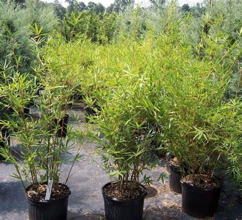 tropical plants wholesale tropical plant nurseries wholesale miami florida golden