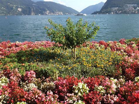 fiori lugano fiori parco ciani e ago di lugano v fashion world