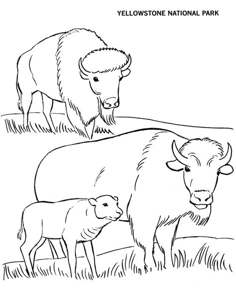 yellowstone national park coloring page travel pinterest