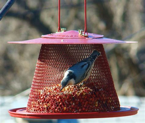 no no red cardinal wire mesh bird feeder