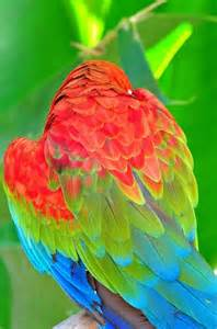 macaw colors color me happy 34 photos click here the